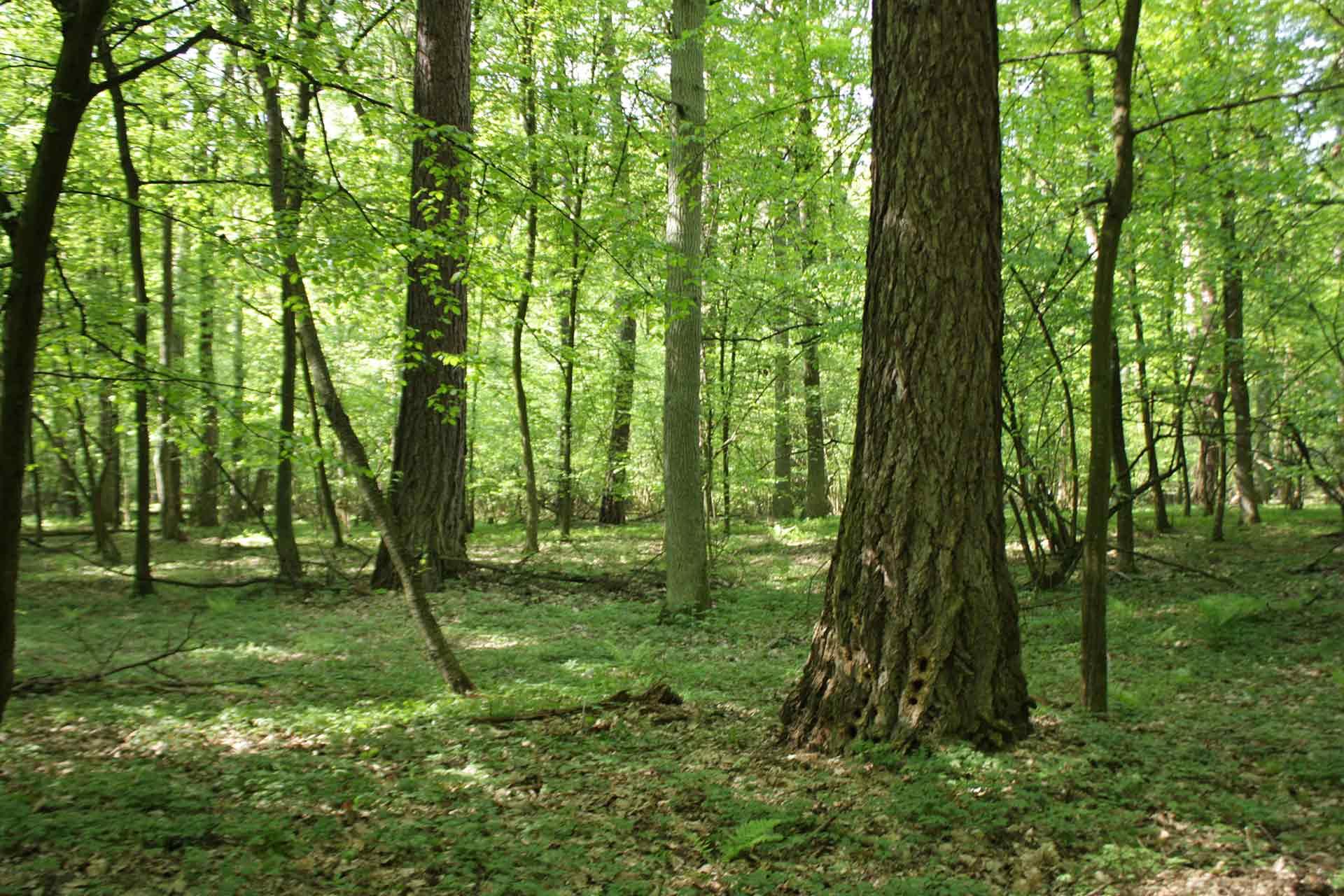 Rezerwat Trebaczew